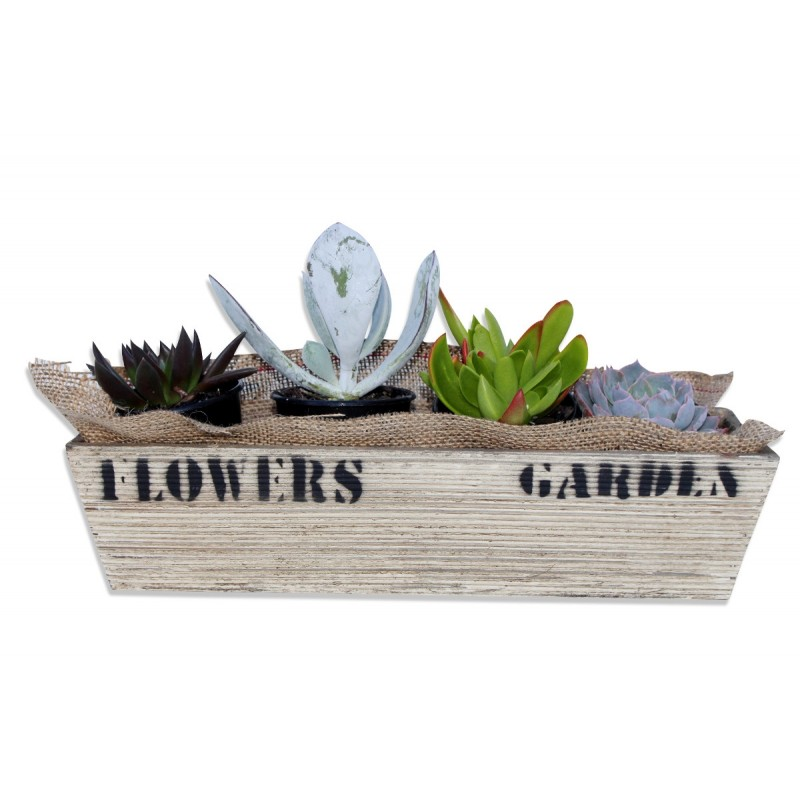 Succulent Gift Delivery