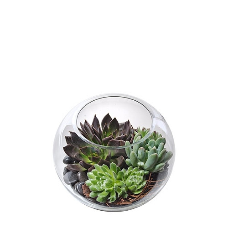 Succulents In Fish Bowl Perth Succulent Plant Gifts Delivery Perth