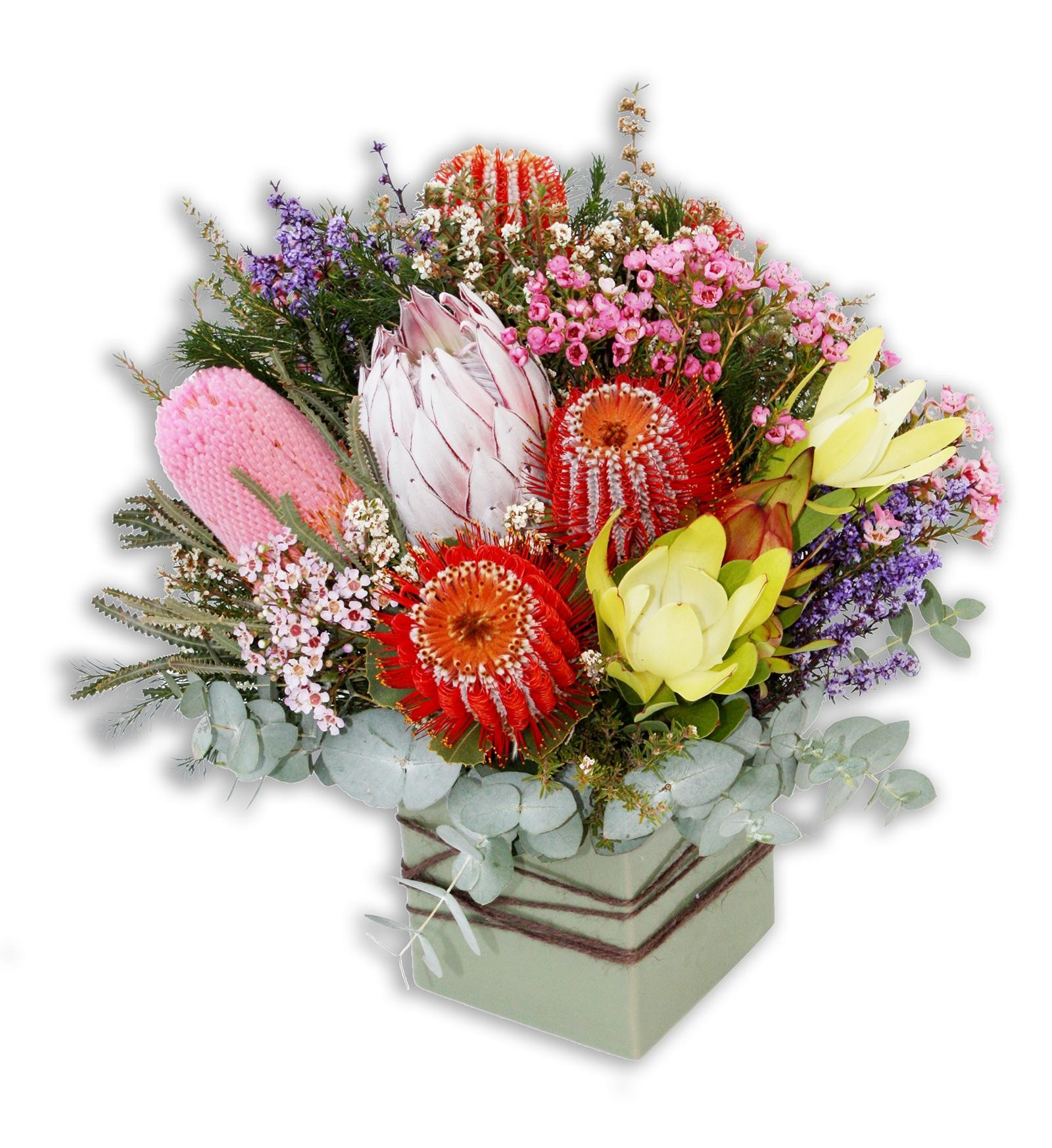 Australian Native Flowers Perth Native Flowers Perth Delivery