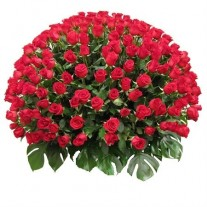 300 Hundred Red Roses in Vase