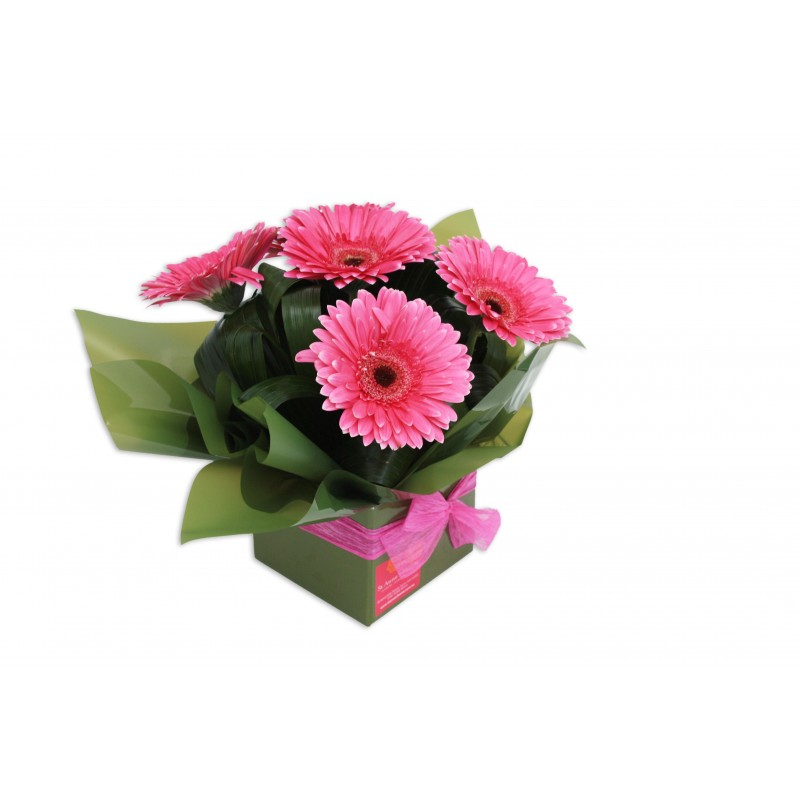 gerbera-flowers-arrangement-perth-3