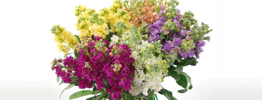Stocks Flower