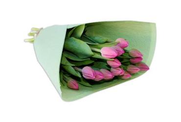 tulips perth wa
